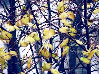 Herbst1_web