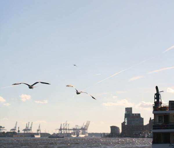 Hafen-Moewen1_web