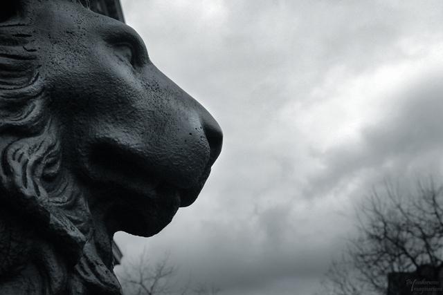 Die Löwen auf dem Universitätsplatz - wer auf ihnen reitet, bevor er seinen Abschluss hat, soll Unglück erfahren.