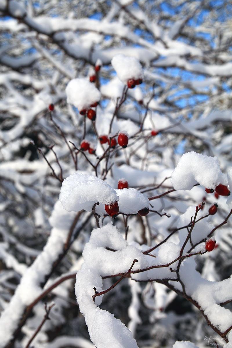 winterzauber4_web